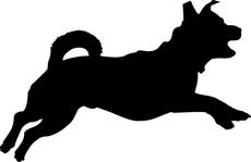 Vialchew Dog